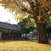 京都の本山佛光寺の境内の D&DEPARTMENT KYOTO様